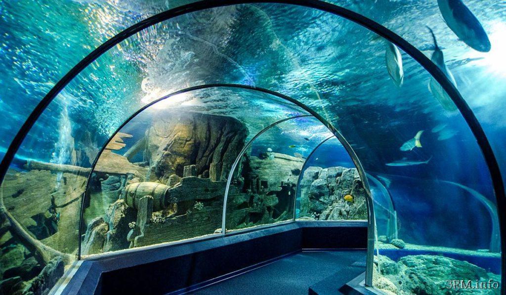 москвариум стеклянные тоннели