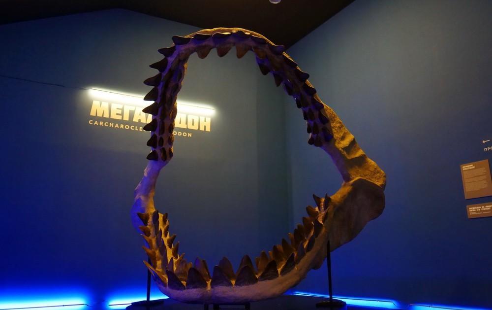 мультимедийная выставка акул москвариум