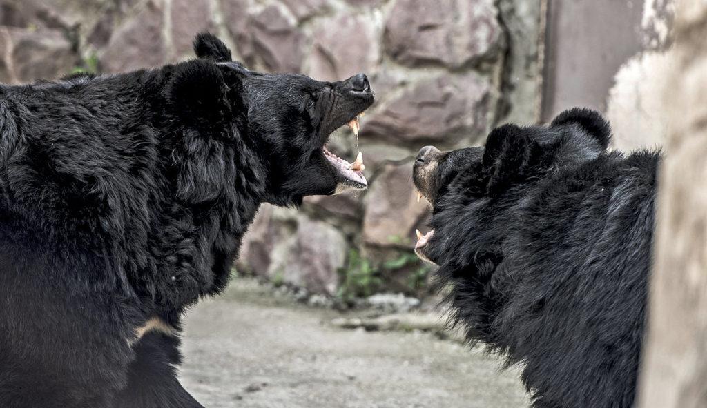 Медведи в Московском зоопарке