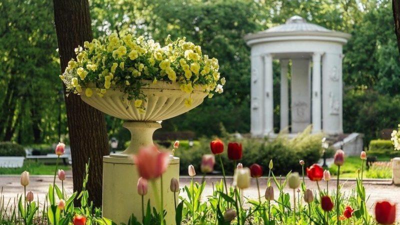Цветы в Нескучном саду