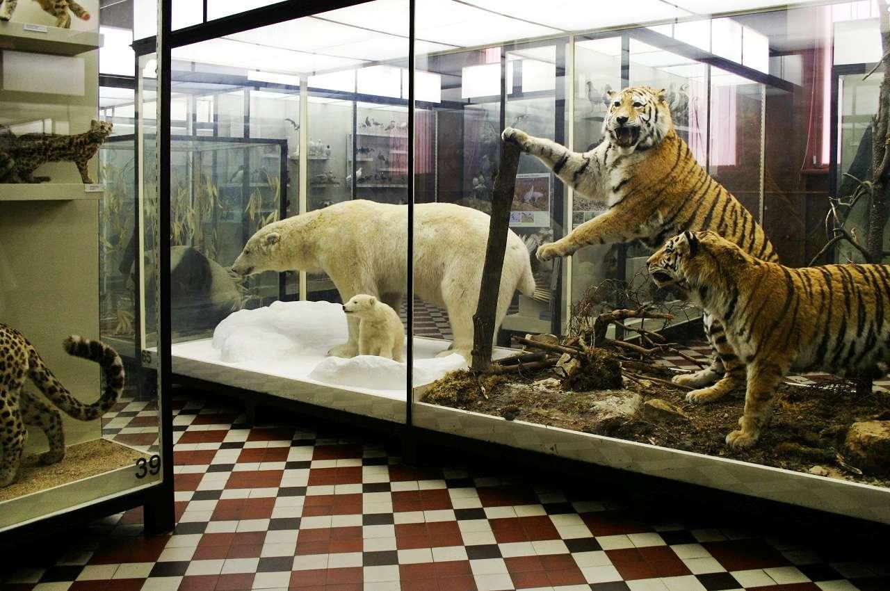 Зоологический музей МГУ им. Ломоносова в Москве