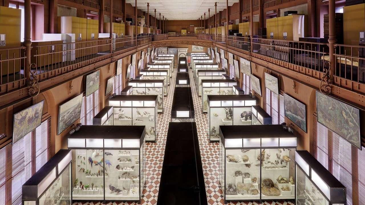 Зоологический музей в Москве