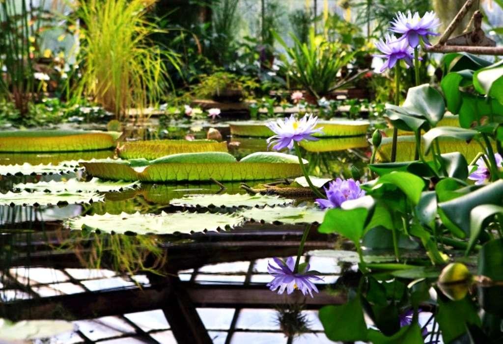 Фондовая оранжерея Ботанического сада в Москве