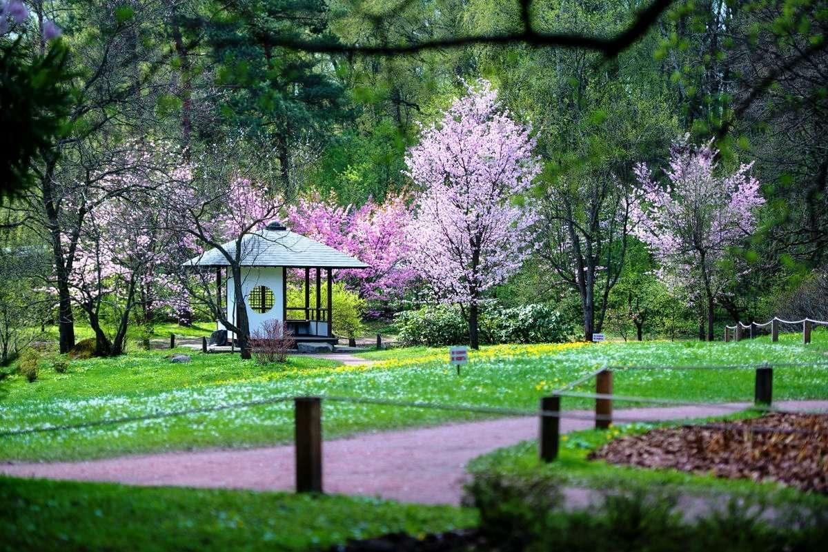 Японский сад Ботанического сада в Москве