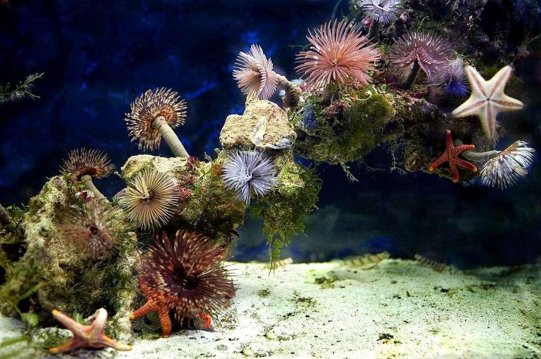 Океанариум «Морской аквариум» в Москве