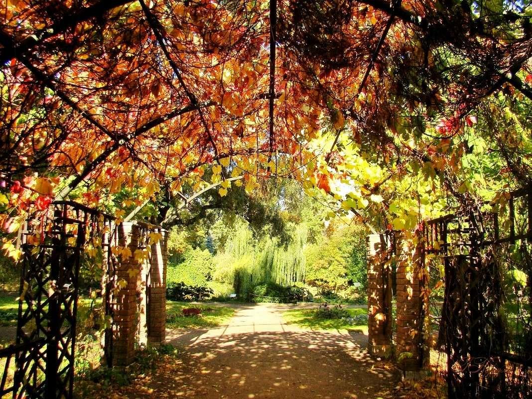 Аптекарский огород осенью