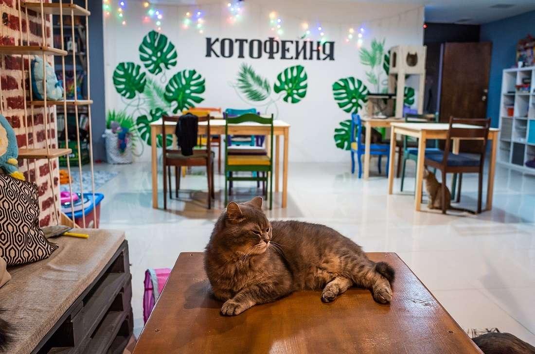 Антикафе котофейня