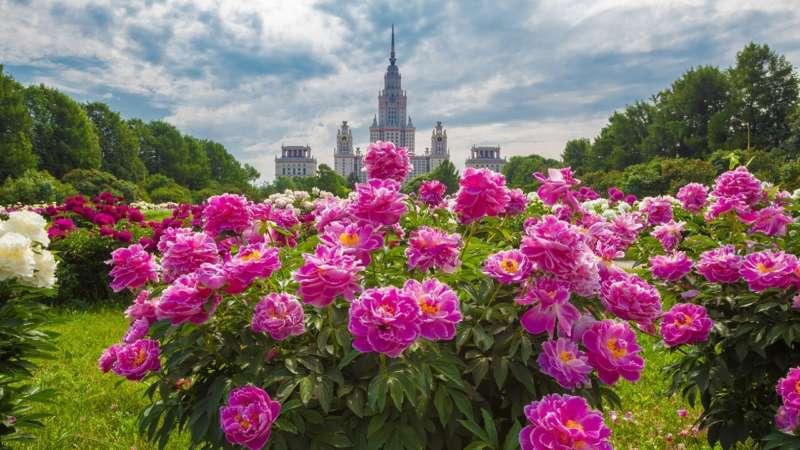 Ботанический сад МГУ в Москве