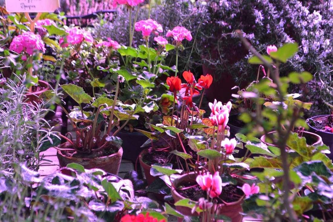 Участок декоративных растений Ботанического сада МГУ