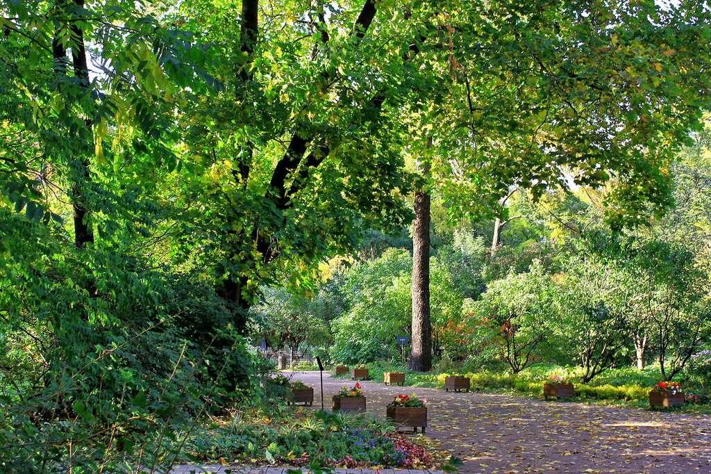 Участок полезных растений Ботанического сада МГУ