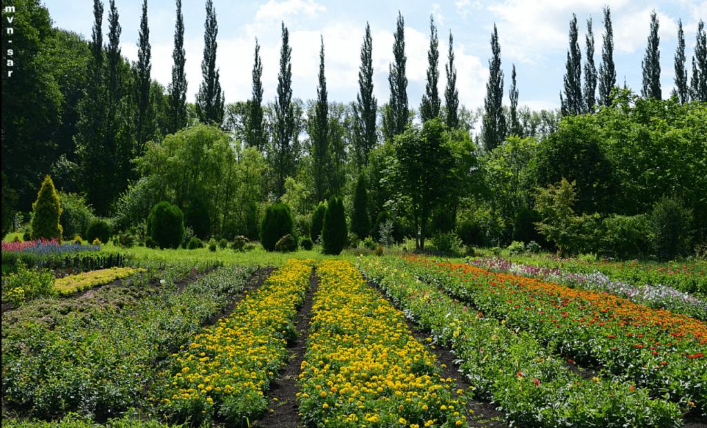 Участок систематики растений Ботанического сада МГУ