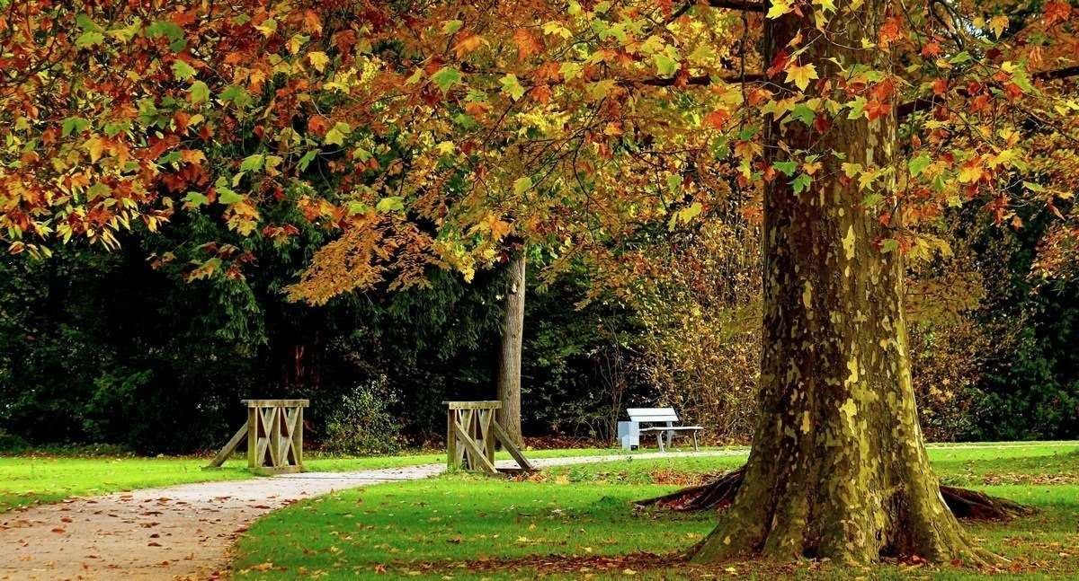 Парк «Дубки» осенью