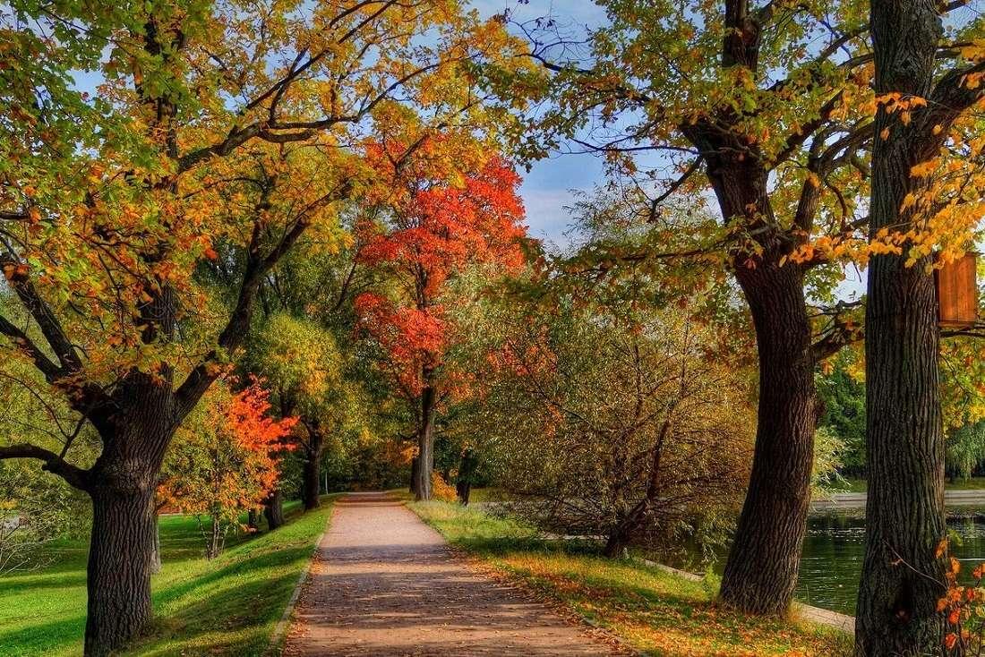 Терлецкая дубрава осенью